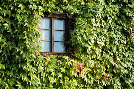 residency: Window on a wall covered with grapes vine Stock Photo