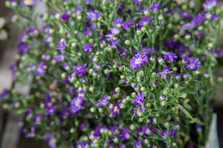 violette fleur: fleur pourpre pour la d�coration Banque d'images