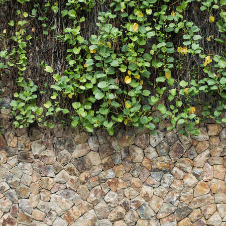 meterial: green ivy and stone wall