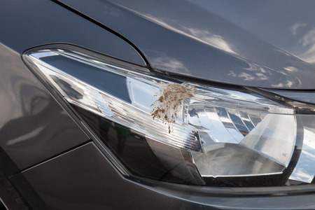 droppings: Closeup of bird droppings on car Stock Photo