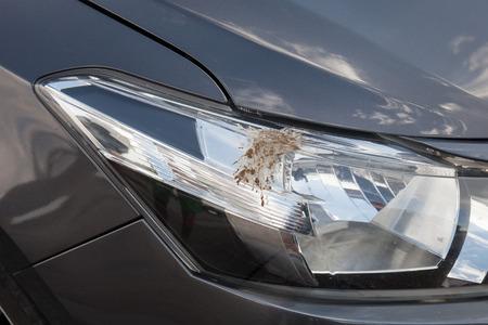 droppings: Closeup of bird droppings on car Stock Photo