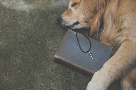 Cross with dog . Religion Concept