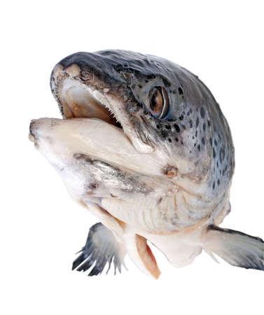 escamas de peces: Cabeza del salm�n   Foto de archivo