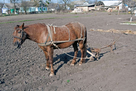 Horse with plow standing on the ground photo
