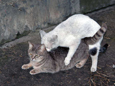 Coupling cats on the ground  photo