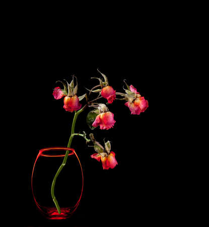 Dead roses in vase isolated on black background photo