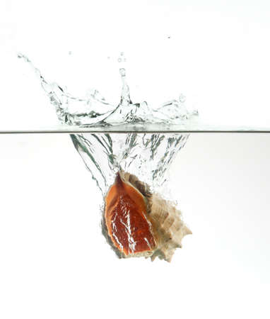 Seashell in water splash isolated on white background with green toning  photo