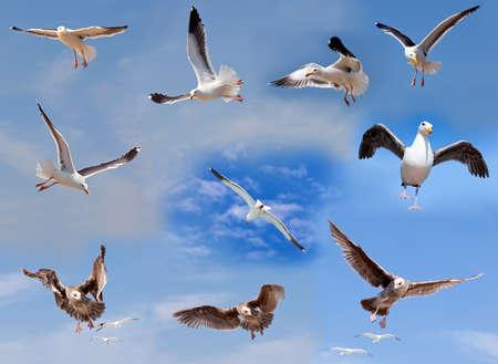 gaviota: Conjunto de volar gaviotas sobre fondo de cielo nuboso Foto de archivo