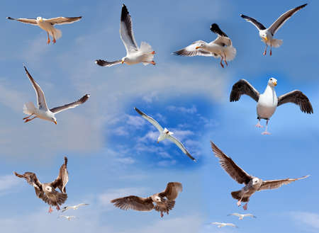 Set of flying seagulls on cloudy sky background photo
