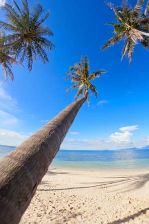 Palm trees on the beach sand on tropical resort Stock Photo - 12185233