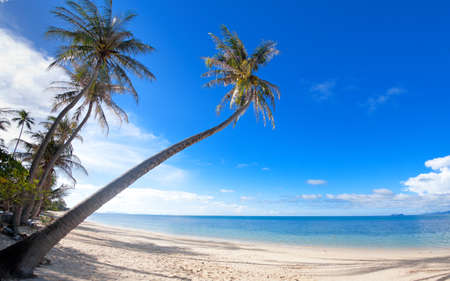 Palm trees on the Bang Por beach sand on tropical resort Koh Samui, Thailand
