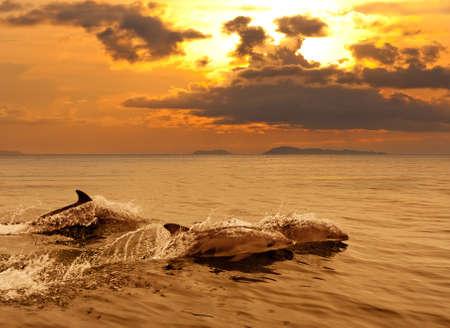 jumping: Tres delfines jugando en el mar puesta de sol con las salpicaduras de agua Foto de archivo