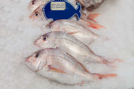 New Zealand red snapper fish on ice in the market  photo