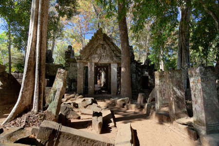 koh: Ancient emple ruins and banyan tree in Koh Ker