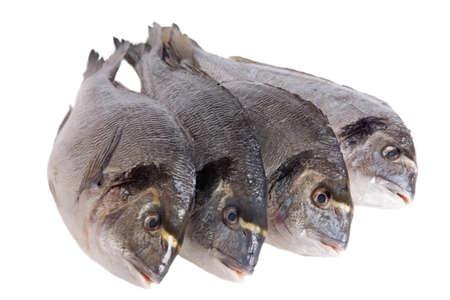 sparus: Four dorado fish isolated on white background