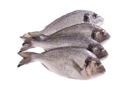 Four dorado fish isolated on white background  photo