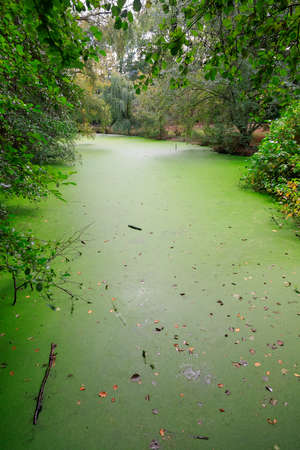 floating on water: Green duckweed covers small pond in the forest Stock Photo