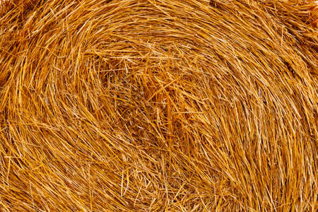 hayroll: Background from wheat straw in roll