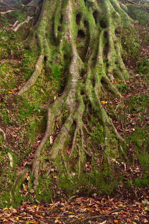 Moss and tree roots in the forest Stockfoto
