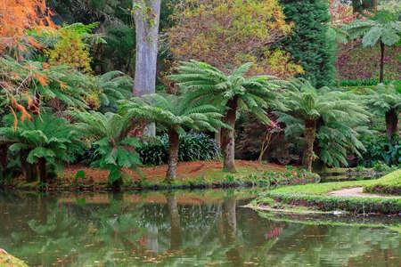 Park with palms and pool on Azores
