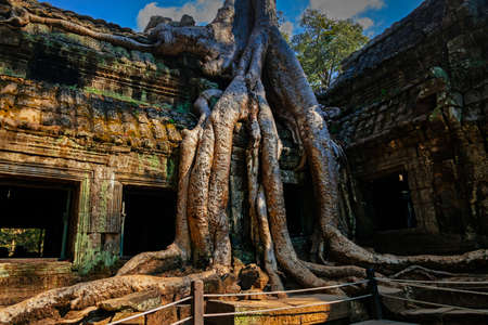 Banyan trees on ruins in Ta Prohm temple, Cambodia