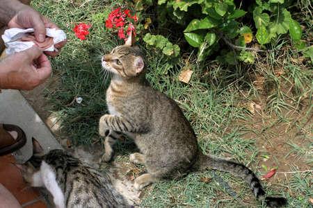 Feeding Cats Stock Photo - 1780352