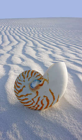 logarithmic: Chambered Nautilus on rippled sand dune Stock Photo