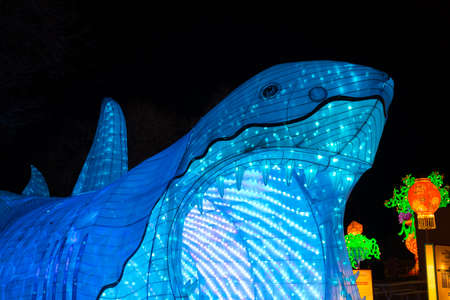 ALBUQUERQUE, NEW MEXICO, USA - NOVEMBER 29, 2018: Dragon Lights Albuquerque, Great White Shark Lantern. Silk lanterns a Chinese traditional art celebrates the Chinese New Year. Handcrafted by artisans from Zigong, China