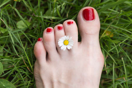 pinched: A small white marguerite held between the toes of a female foot with white skin and red nail polish on a green lush meadow