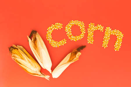 Concept of the word corn in english language formed with dry corn seeds on red background and decorated with golden corn cobs Stock Photo