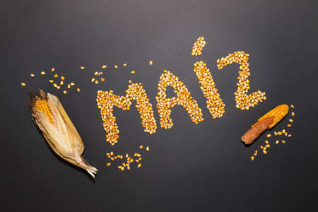Concept of the word corn in spanish language formed with dry corn seeds on black background and decorated with golden corn cobs and dry corn seeds Stock Photo
