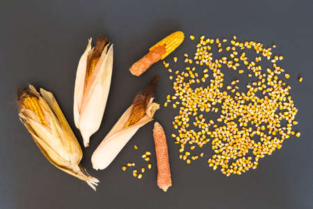 Dry golden corn cobs and seeds arranged on black background Stock Photo