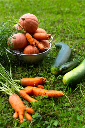 Close-up of freshly harvested organic pumpkins, zucchinis and carrots laying on grass.