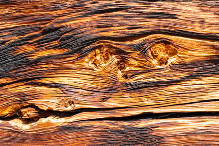 Close-up of an old, strongly textured wooden plank with warped structure, burnt surface and knotholes Reklamní fotografie - 124437807