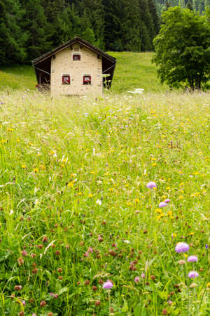 Switzerland, Splügen. Front view of a beautiful small stone chalet with red window shutters standing in a lush green meadow surrounded by a forest. Picture taken on 5th of July 18