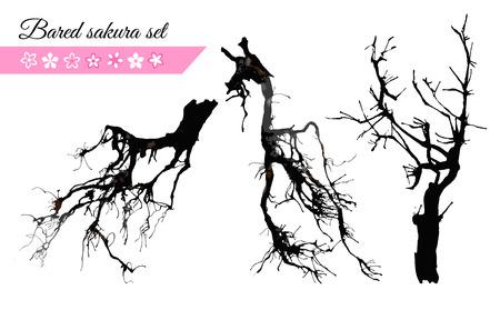 Bared sakura and japanese cherry tree flower set for your asian design. Vector illustration