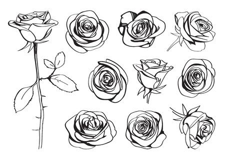 Conjunto desenhado às mãos de rosas. Silhueta da inflorescência das flores da rosa da linha preta isolada no fundo branco. Coleção de ícones. Ilustração do doodle de vetores