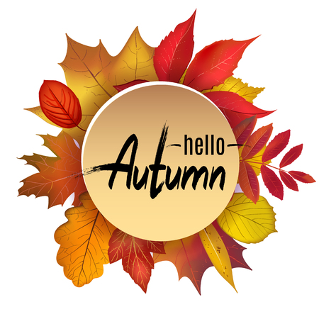 Hello Autumn lettering circle banner on colored foliage border composition isolated on white background. Bright falling leaves with place for your text. Vector illustration