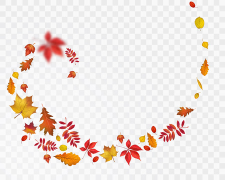 Bright autumn leaves spiral on transparent background. Vector nature illustration for your fall design