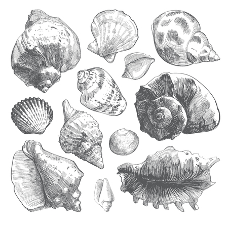 Sea shells sketch set. Grey doodle seashell silhouettes isolated on white background. Vector ocean life hand drawn illustration Çizim
