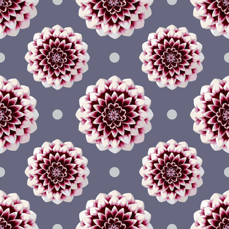 Beautiful red and white dahlia flower blossom palka dot seamless pattern on purple background. Colorful georgina nature vector illustration