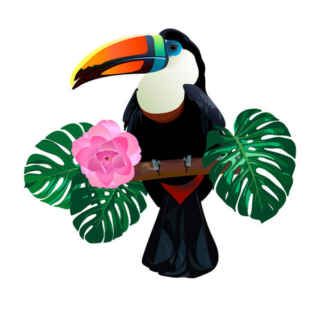 Bright toucan bird sitting on branch around palm monstera leaves and flowers on white background. Vector tropical exotic illustration for your summer design