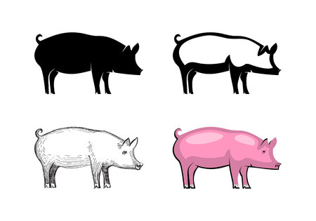 Pig animal icon set isolated on white background: silhouette, outline, sketch and color. Wild boar symbol of Chinese New Year 2019. Vector illustration Çizim