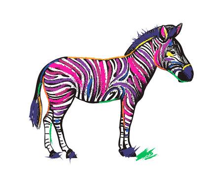 Zebra animal in rainbow color stripes isolated on white background. Vector creative illustration for bright magic animal Çizim