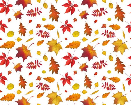 Bright flying autumn leaves seamless pattern isolated on white background. Horizontal nature illustration for your fall design