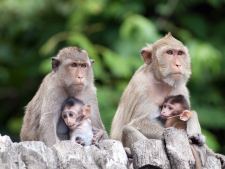 Two monkey family