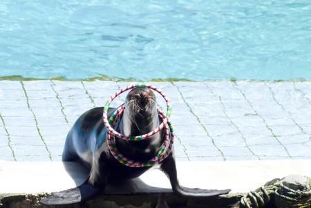 yetenekli: Deniz parkta Tayland yetenekli gösteri Seal