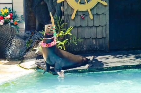 yetenekli: Deniz parkı Tayland yetenekli gösterisi Seal