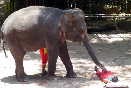 Elephant thai  talented show in zoo.