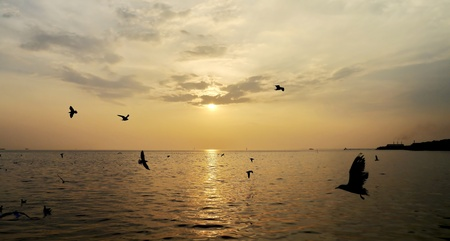 Twilight ocean birds in thailand. photo